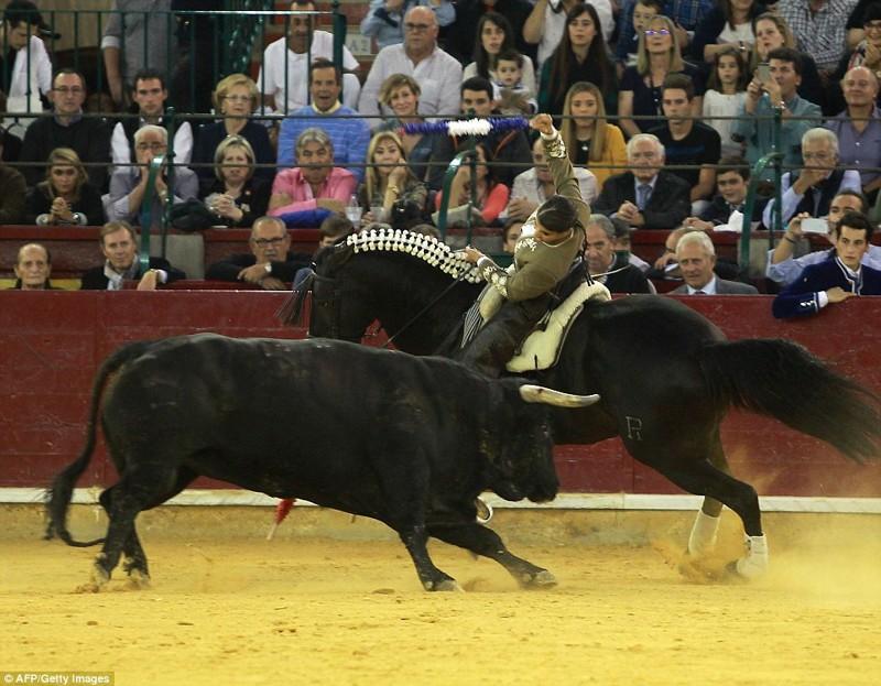 Она сменила двух лошадей и двух быков, выглядела уверенной и смелой, вонзая в быков бандерильи быки, испания, коррида, месть