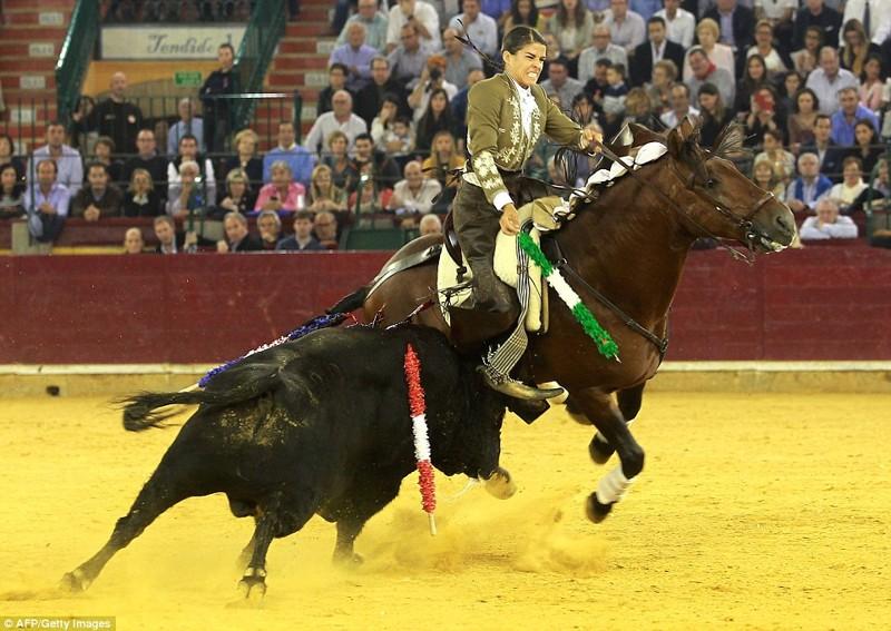 Женщина-матадор, год назад убившая быка и отрезавшая ему уши, поплатилась сегодня быки, испания, коррида, месть
