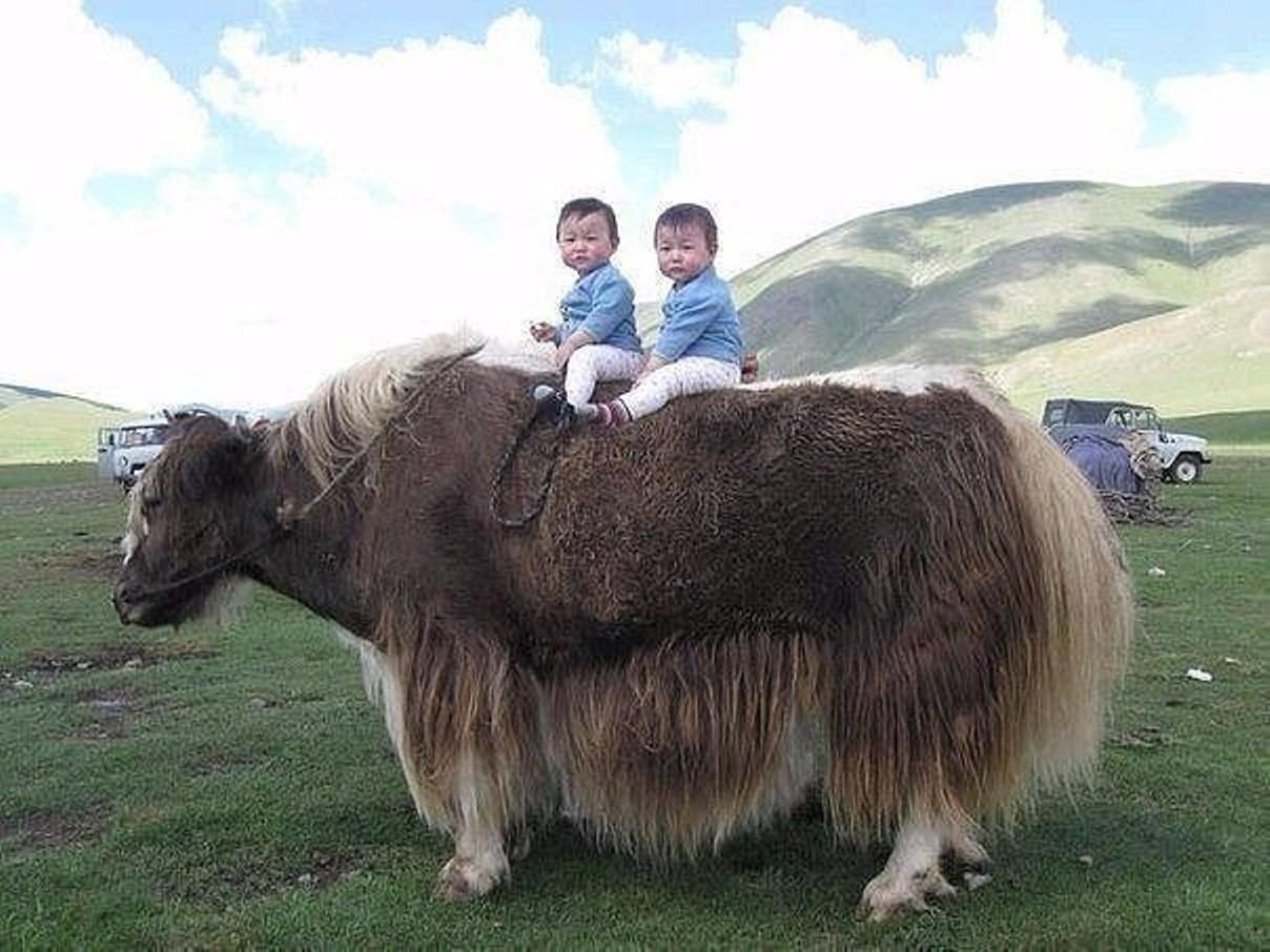 всегда кыргызские прикольные картинки обязательно читайте инструкцию