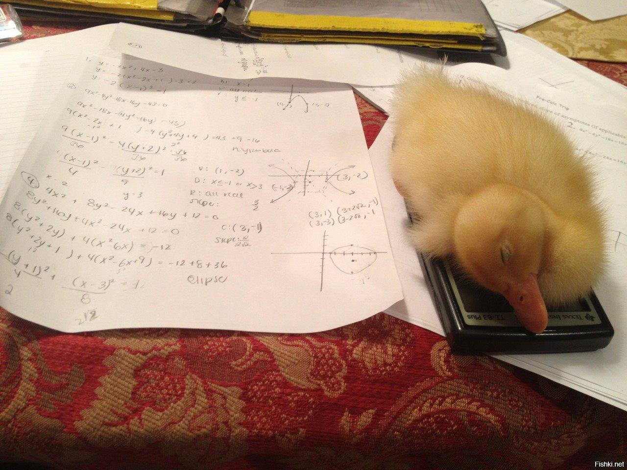Открытки днем, смешные картинки с надписями про домашнее задание