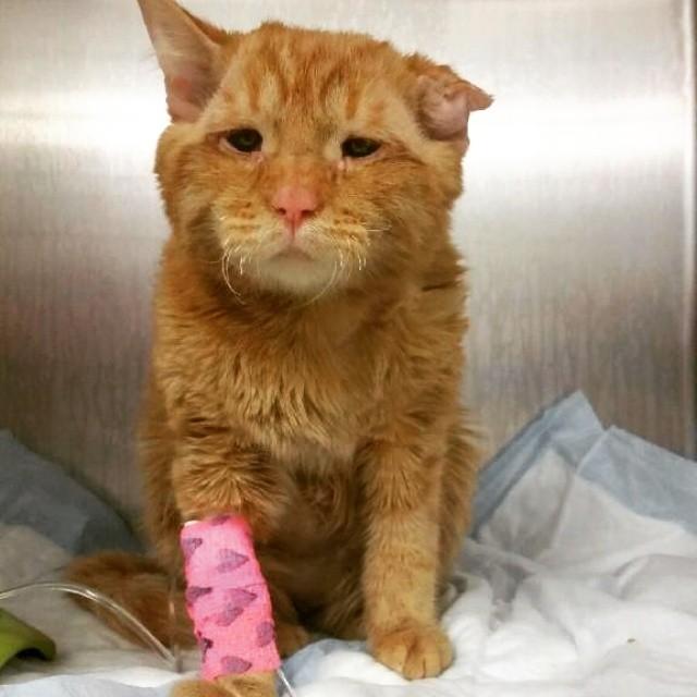 «Самый грустный кот» преобразился всего через час после того, как ему нашли новый дом животные, кот