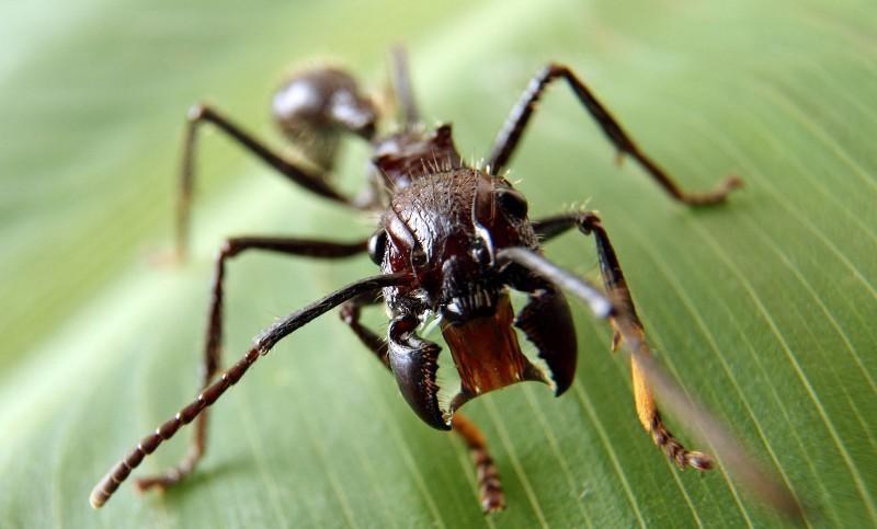 Муравьи - интересные факты животные, муравьи, факты