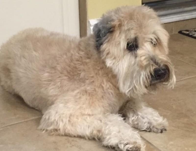 Признанный мертвым пес вернулся к своим хозяевам спустя 10 лет разлуки
