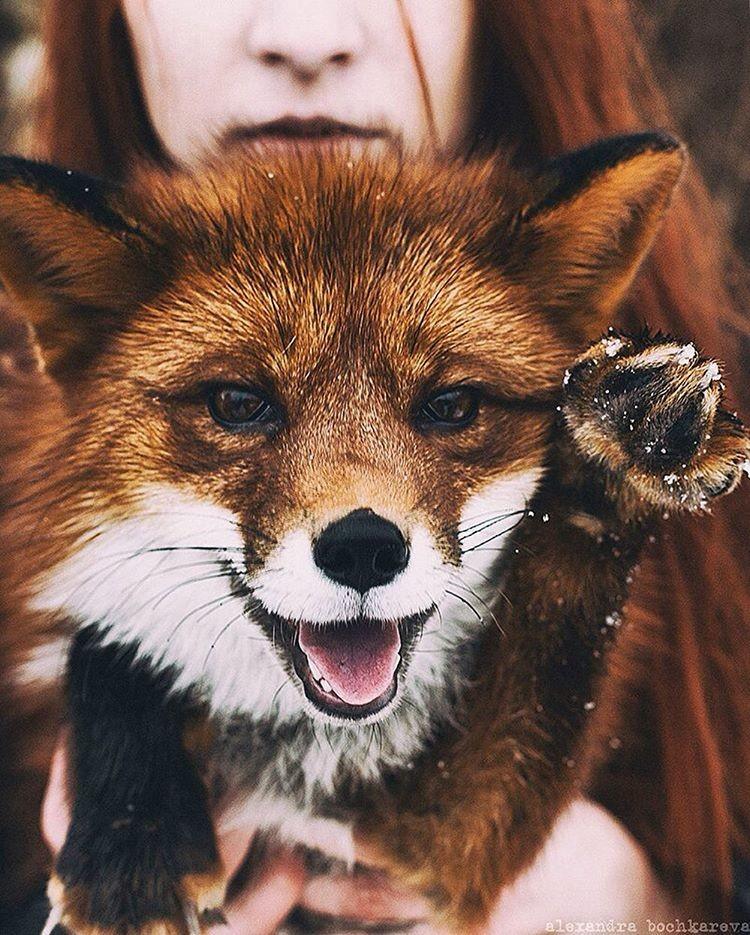 Фото красивой девушки лисички
