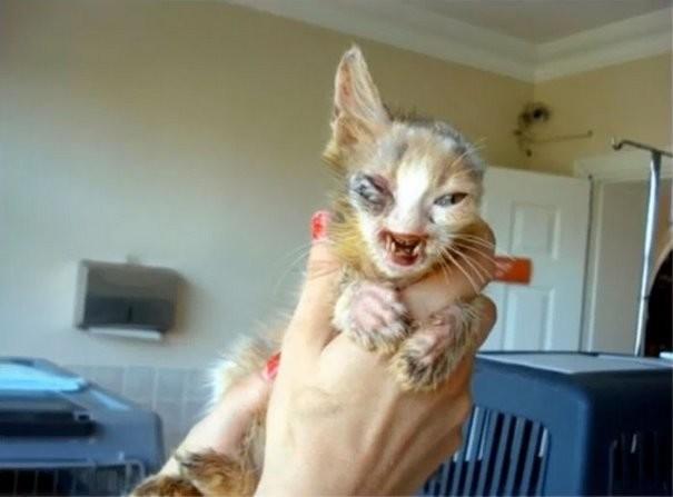 Все проходили мимо этого котенка, живущего на улице Стамбула животные, кошки, стамбул