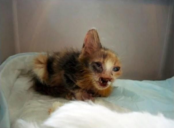 Пока 7-летняя девочка не изменила жизнь этого существа  животные, кошки, стамбул