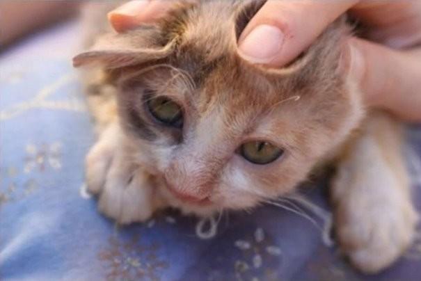 Котенка отвезли ветеринарам, которые оказали животному помощь животные, кошки, стамбул