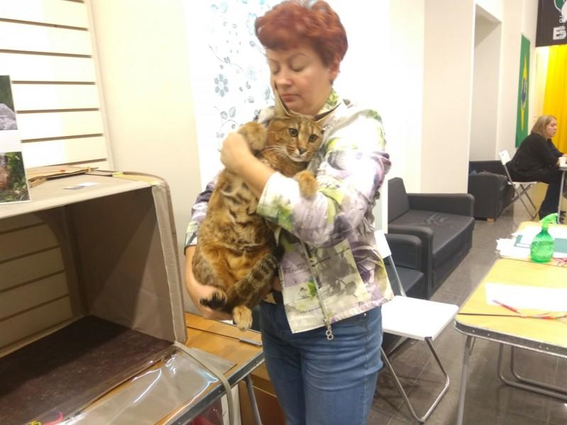 фото кошки ради которой хозяйка продала машину череда