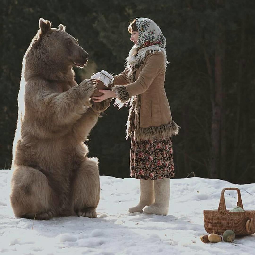 заказа рисунка ручной медведь картинки сайт имеет никакого