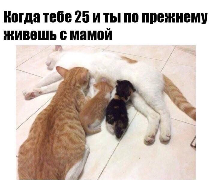 Интернет магазин футболок СловоМне. ру, футболки с