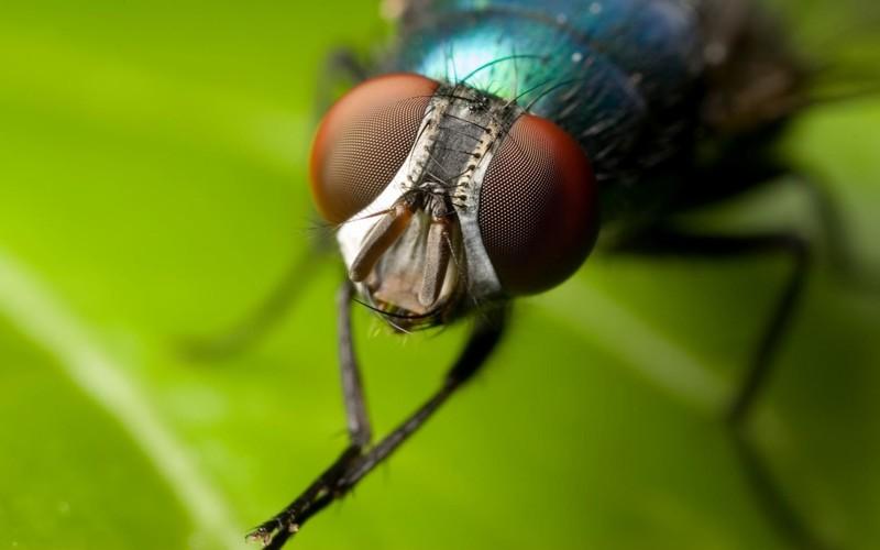 МУХА - Расскажите детям о насекомых