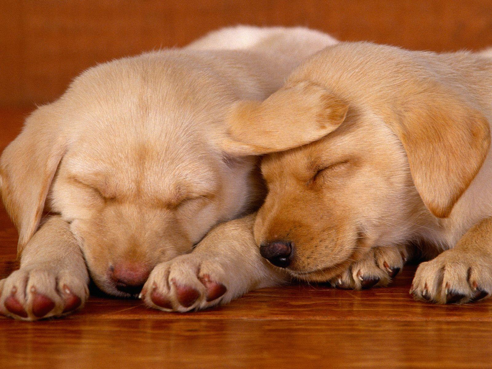 Картинки щенки милые и красивые спящие нас