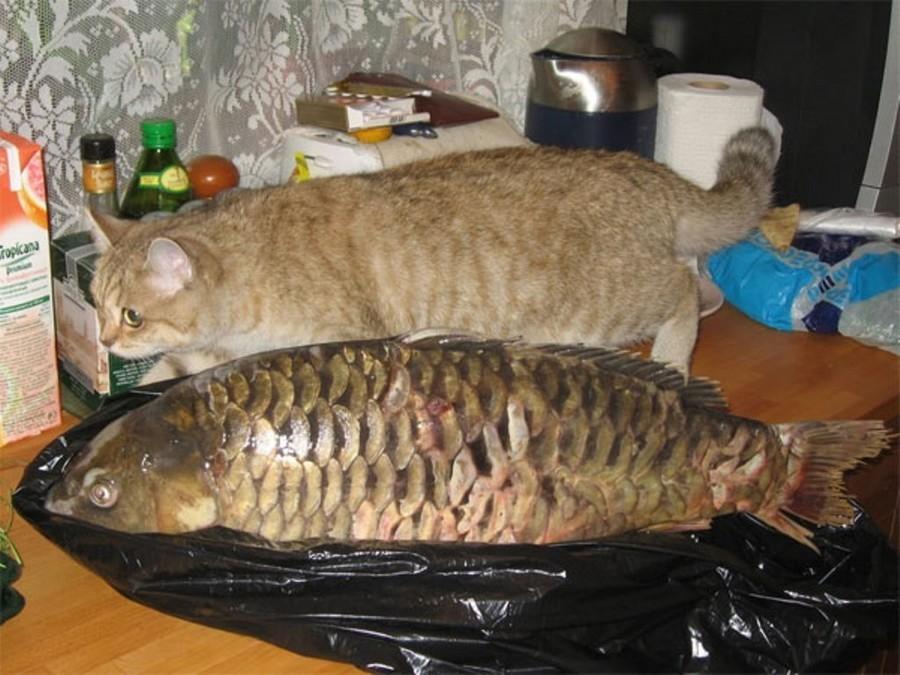 Рыбный день картинки прикольные