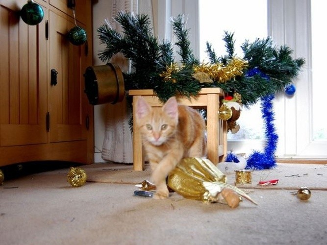 картинка кот читает книгу как повалить елку выполненный