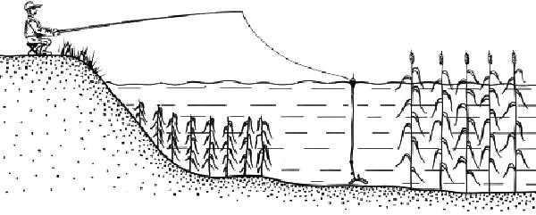 ловля карася в камышах на поплавочную удочку