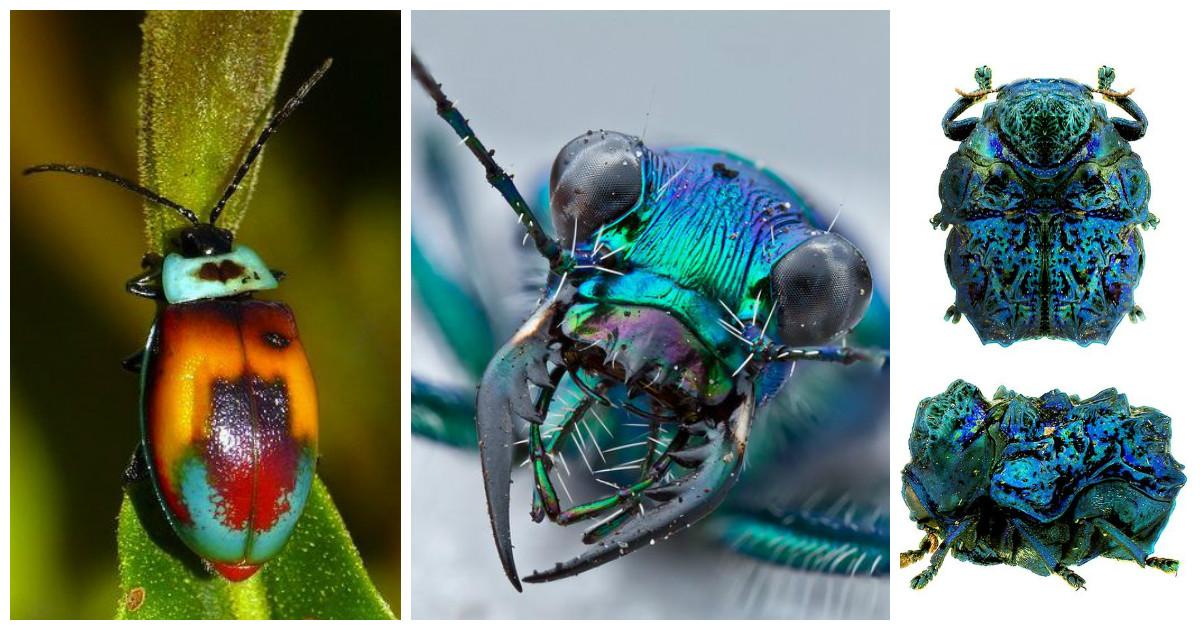 Самые большие жуки в мире: виды, фото, описание