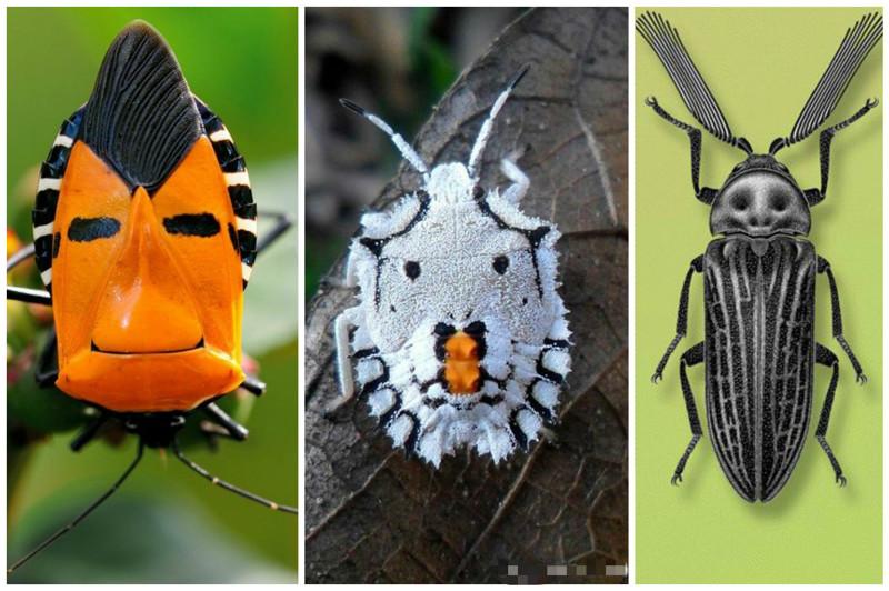 Существует около 400 тыс. известных видов жуков. Каждое четвертое из всех животных это жук.