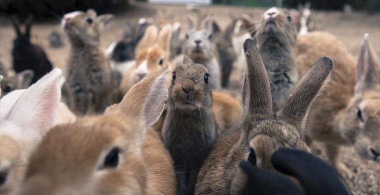 Остров кроликов животные, остров, природа