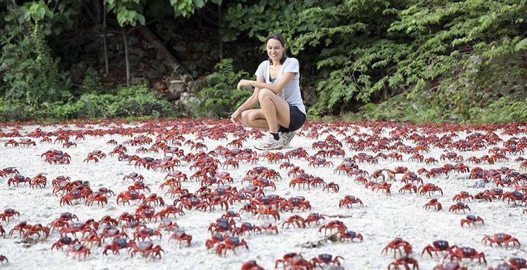 Места на планете, где животные правят бал животные, остров, природа