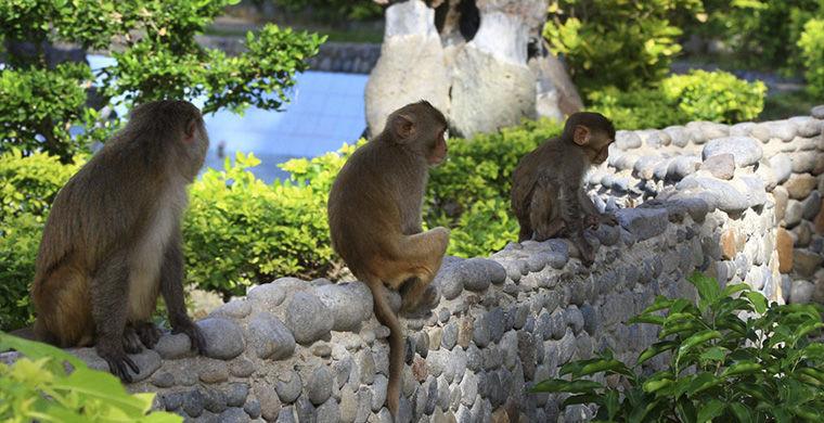 Остров обезьян животные, остров, природа