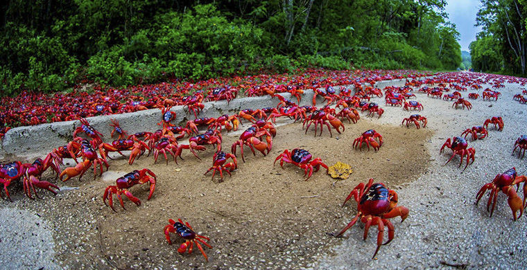 Остров крабов животные, остров, природа