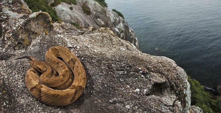 Остров змей животные, остров, природа