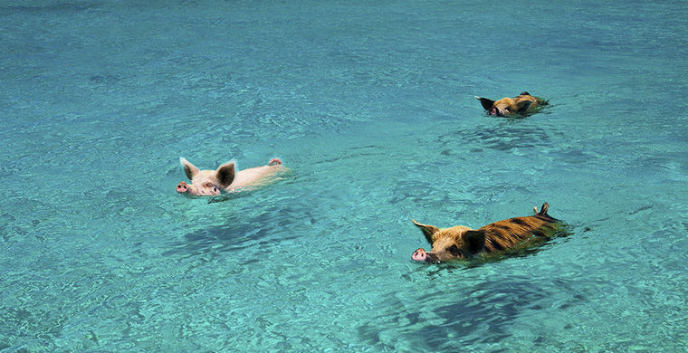 Картинки по запросу 10 необычных мест на планете, где животных больше, чем людей