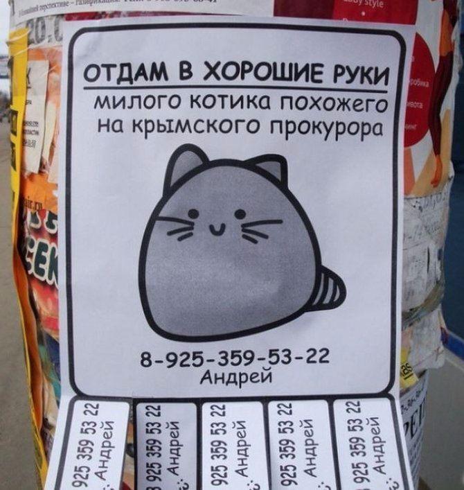 Объявления отдам котят в хорошие руки образец