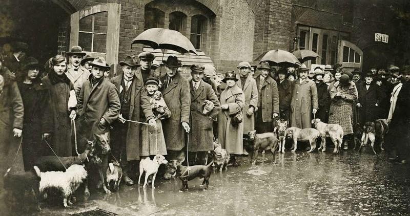 1926 год. Берлин. Люди привели своих собак на усыпление, так как они не в состоянии платить увеличенный налог на домашних питомцев. интересно, история, фото