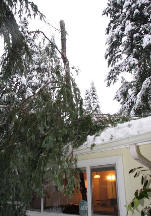 Дерево проткнуло дом насквозь авария, дтп, животные, история, родился в рубашке