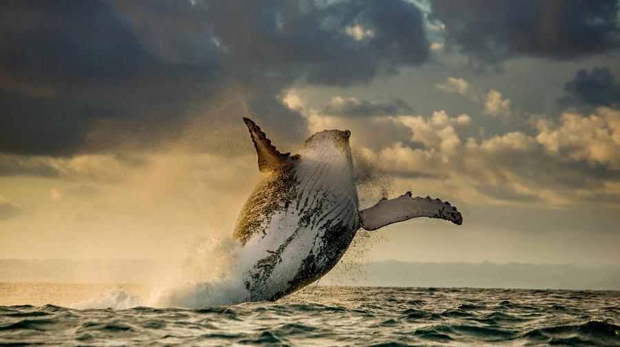 Картинки по запросу Самые красивые изображения диких животных (ФОТО)