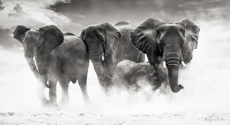 10.  животные, кадр, фото