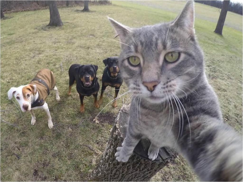 Привет! С вами Джонни Кэтсвилл! Сегодня мы научим этих псин уважать котов животные, прикол, сэлфи