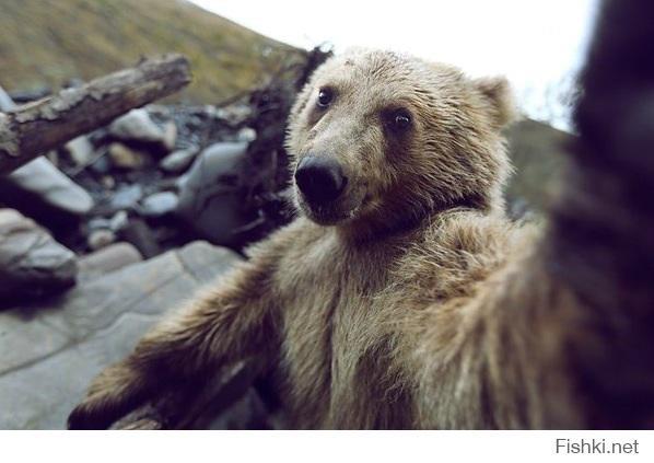 Привет от Медведа животные, прикол, сэлфи