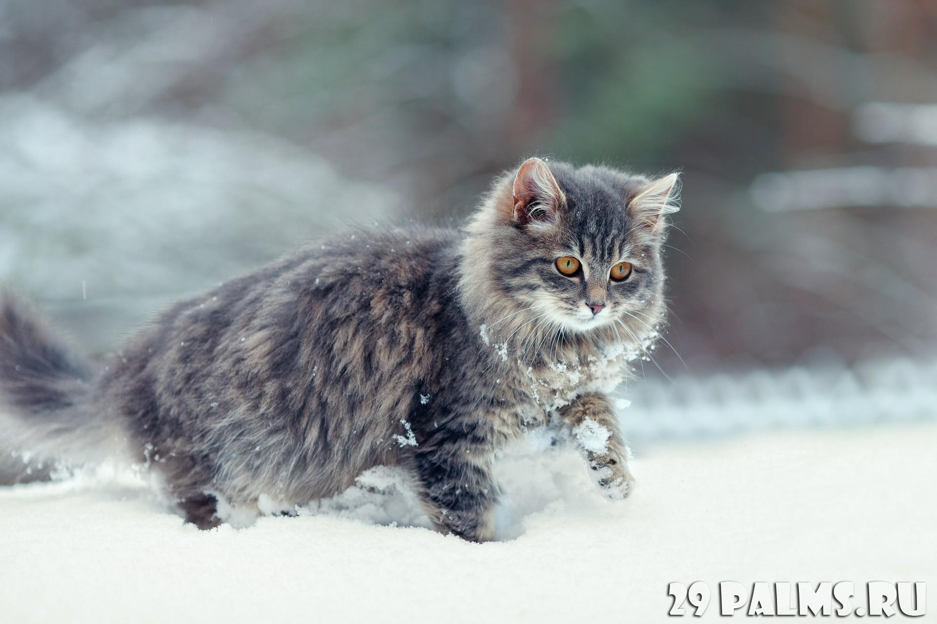free cat urine removal recipe