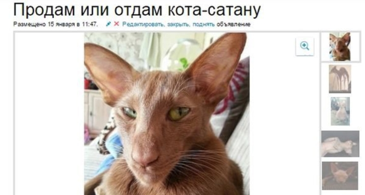 Объявления куплю котёнка выхино частные объявления