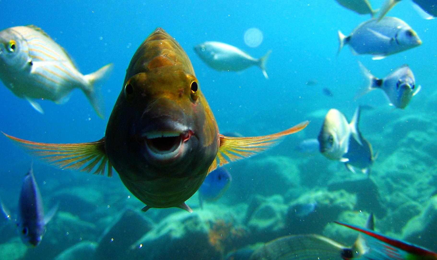 Рыбка смешные картинки