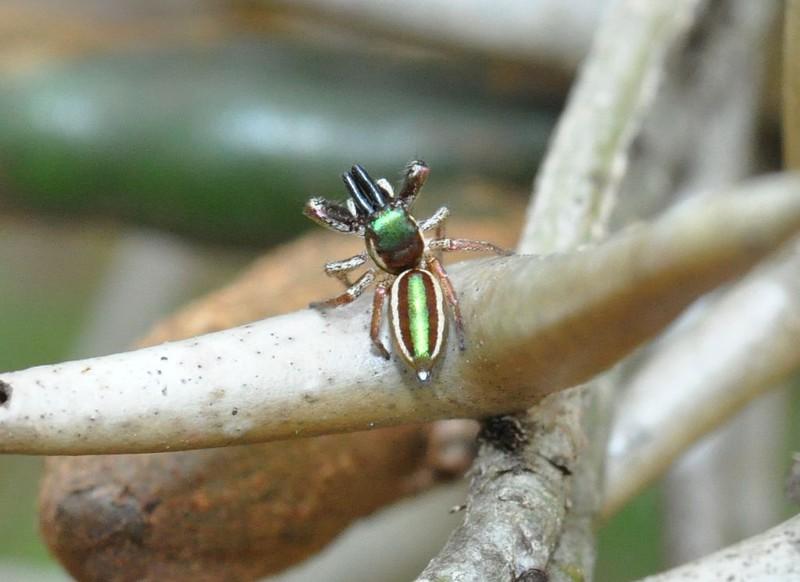 Не все пауки являются хищниками интересное, интересные факты, факты