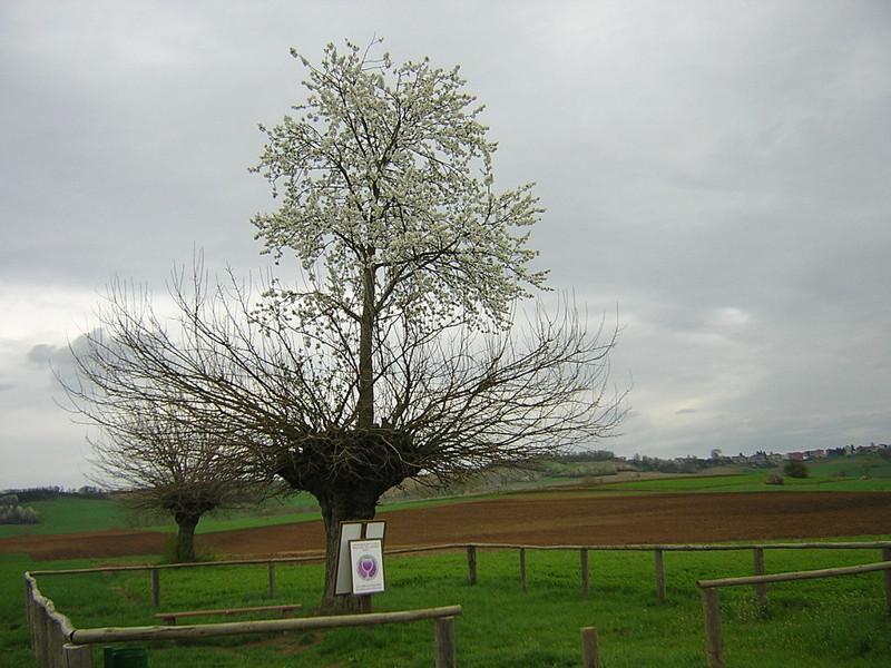Дерево в дереве интересное, интересные факты, факты