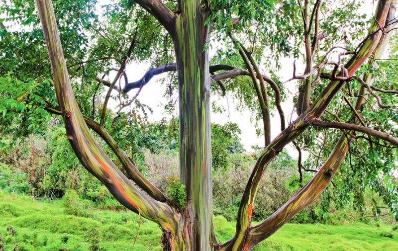 Природа - удивительная художница деревья, история, факты