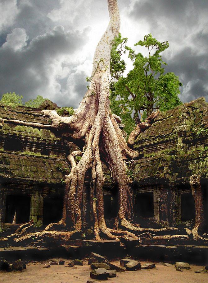 Сейбы деревья, история, факты