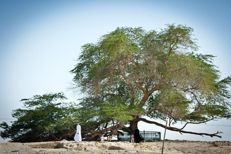 Дереве Жизни деревья, история, факты