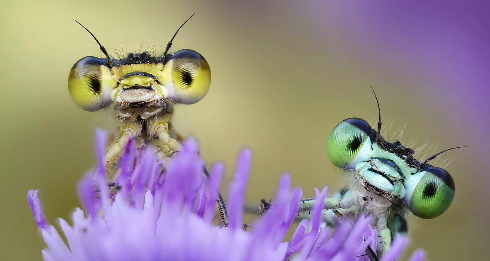 Надписью, прикольные картинки насекомыми