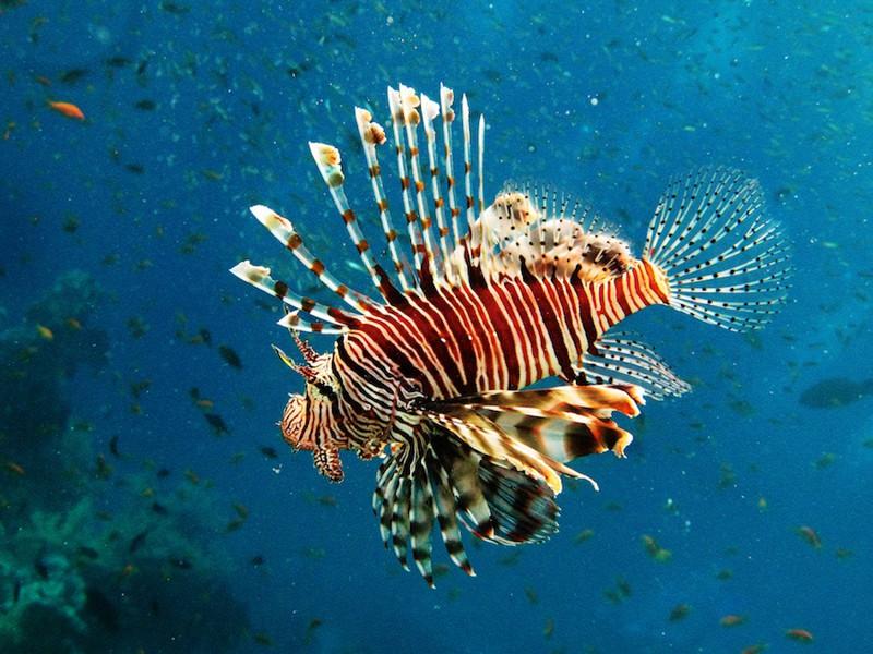 фото ядовитых рыб египта вашей камере нет