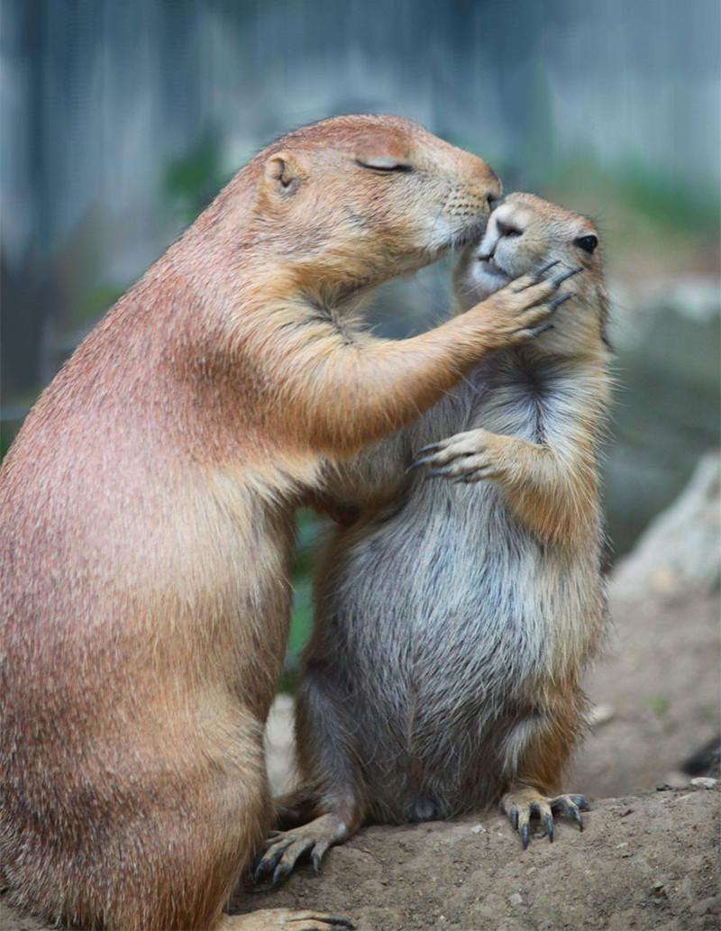 Картинка про поцелуй смешная