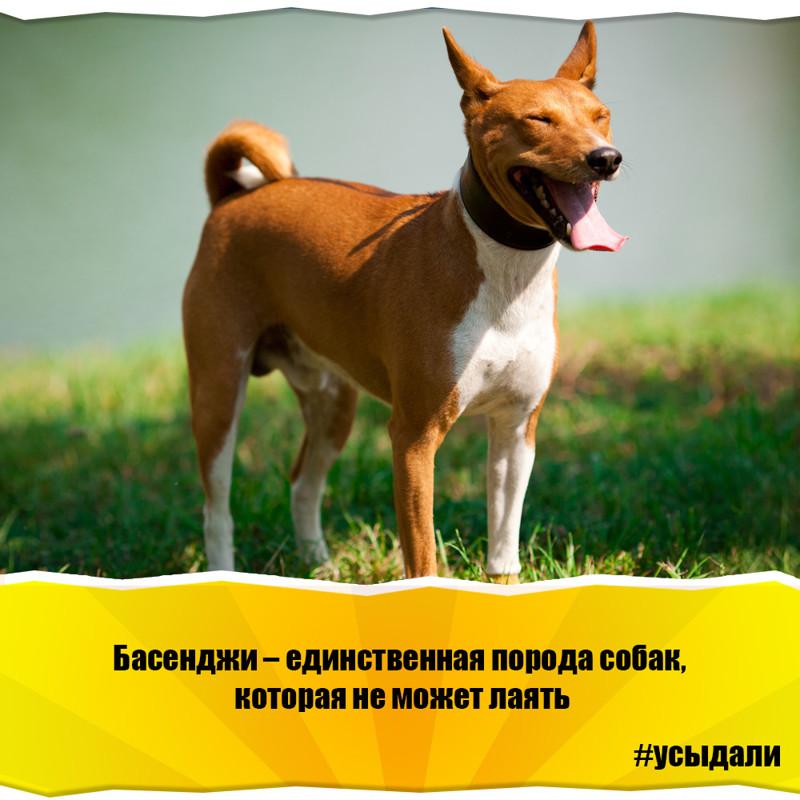 Забавные факты о животных с картинками должна