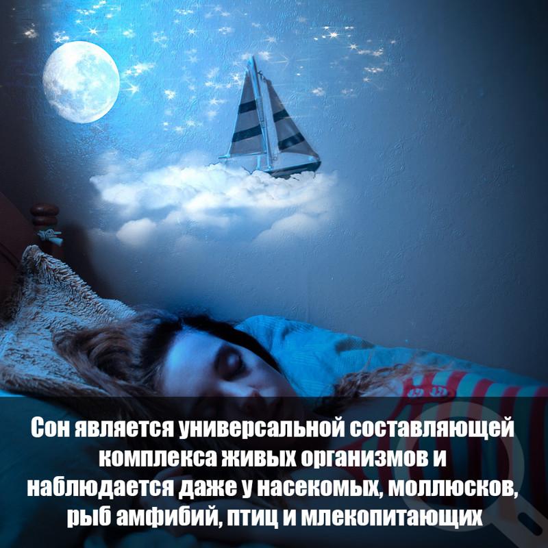 Интересные факты о снах и сновидениях картинки белоусова архитектор