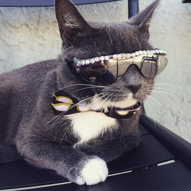 Картинки о коте крутого