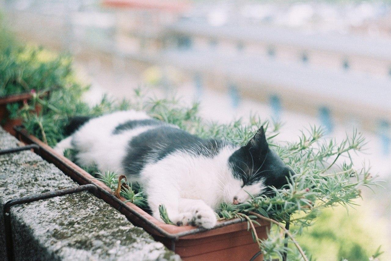 Картинки по запросу Коты-флористы украсят ваш дом и вашу жизнь
