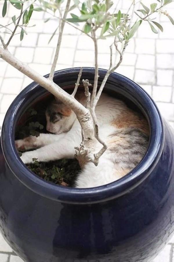 Картинки по запросу Коты-флористы
